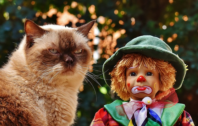 angry cat and sad clown